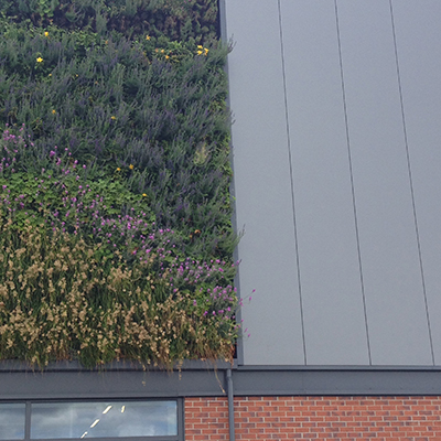 Powder coated rainscreen cladding alongside a vertical garden